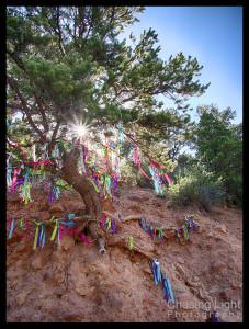 Hope Tree, Glenwood Springs, Colorado
